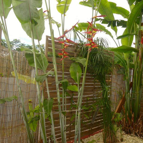 10 plante et balisier