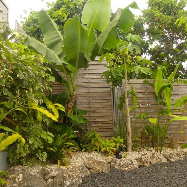 31. jardin papayer JPG